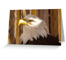 EagleEye Greeting Card