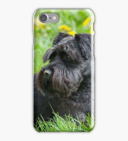 Black Miniature Schnauzer Dog iPhone Case/Skin