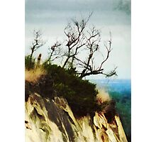 Surviving on the Cliff Top  Photographic Print