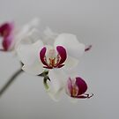 Orchid flower by Edyta Magdalena Pelc