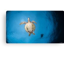 Turtles flight Canvas Print