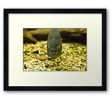 piranha   on many products... Framed Print