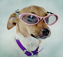 Fabulous Sunglasses Dog on Dusty Blue Background by CptnLucky