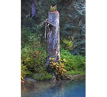 Tree trunk (HDR) Photographic Print