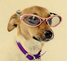 Fabulous Vintage Sunglasses Dog by CptnLucky