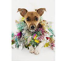 Christmas Tinsel Dog Photographic Print