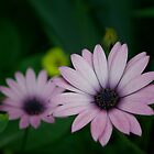 Pink Flowers by Thomas Stayner