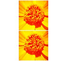 Yellowie Collage Photographic Print