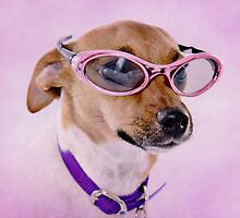 Fabulous Sunglasses Dog Sweet by CptnLucky