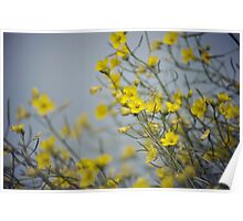 Beautiful Fall Flowers Poster