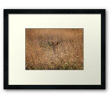 Outback Dingo Framed Print