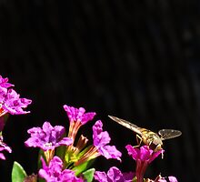 A busy spring wasp by RebeccaJaime