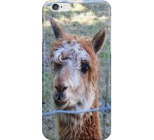 lama iPhone Case/Skin