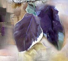 Ivy Leaves 2 by Anivad - Davina Nicholas