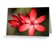 Red means grow! Greeting Card