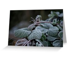 Strawberry Frost Greeting Card