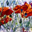riot of colour by Teresa Pople