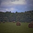 A Roll in The Hay by Ken Baugh