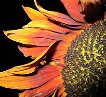 Sunflower at night by Eleanor11