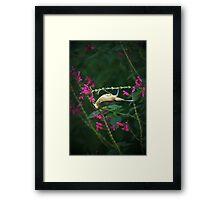 Honey Eater Framed Print
