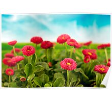 Daisies under blue sky Poster