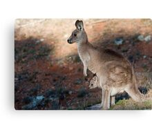 Kangaroo and joey Canvas Print
