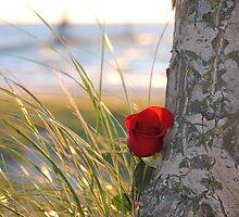 Flower Beauty - 17 by Debbie Mueller