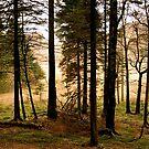 Blea Tarn  .. by Mike  Waldron