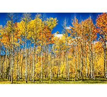 Colorful Colorado Autumn Aspen Trees Photographic Print