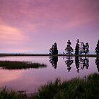 Early Morning - Pelican Creek, Yellowstone by ejlinkphoto