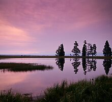 Early Morning - Pelican Creek, Yellowstone by ejlinkphoto