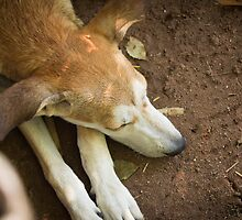 Dog sleeping by Alan Campos