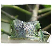 do you think I'm looking like a frog? - piensas que me parece como una rana Poster
