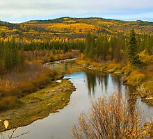 Colours of Fall by Yukondick