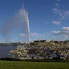 Canberra  Australia In Spring  by Kym Bradley