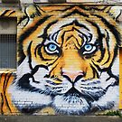 Tiger Graffiti, Abbotsford by Roz McQuillan