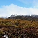 Cradle Mt peak obscured by snow  28.9.2013 by gaylene