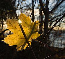 Spotlight on Autumn by Georgia Mizuleva
