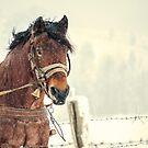 Portrait of a horse by kumari