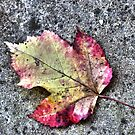 Autumn leaf by RosiLorz