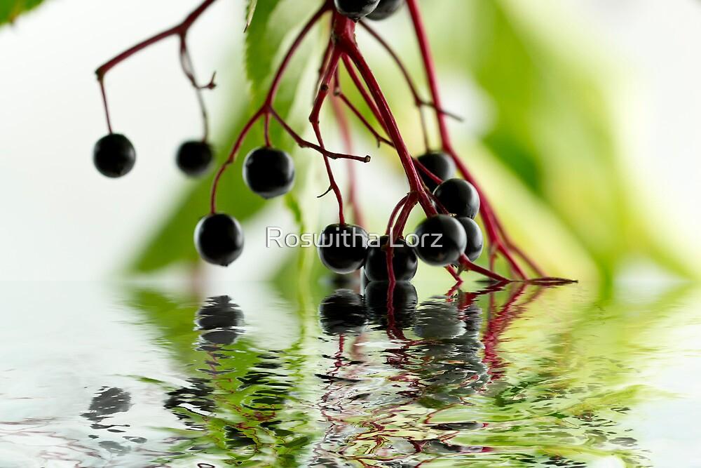 Elderberry by RosiLorz