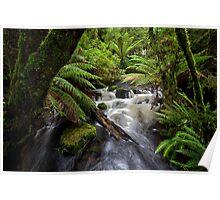 Small Water Cascade, Mt Field, Tasmania Poster