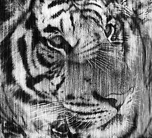 Black White Vintage Layered Tiger by Silvia Neto