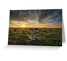 Cows Portrait Greeting Card