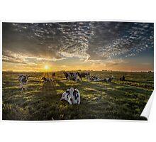 Cows Portrait Poster