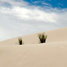 white sand dunes,new mexico by milena boeva