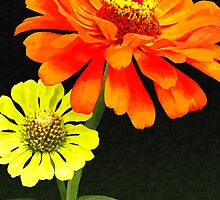 Orange Zinnia and Yellow Zinnia by Susan Savad