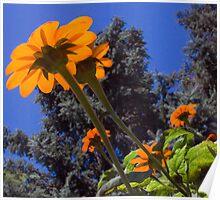 Sun Shinning Thru The Wildflower Poster