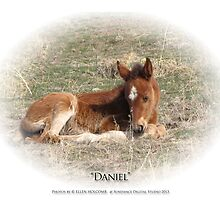 2014 July  Daniel by Ellen  Holcomb