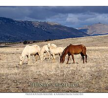 2014 December   Fernley Cremellos by Ellen  Holcomb